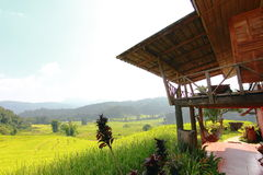 Rice terrace in chiangmai thailand Royalty Free Stock Photography