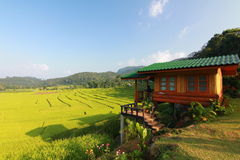Rice terrace in chiangmai thailand Royalty Free Stock Images