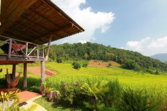 Rice terrace in chiangmai thailand Royalty Free Stock Photos