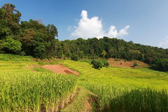 Rice terrace in chiangmai thailand Stock Photos