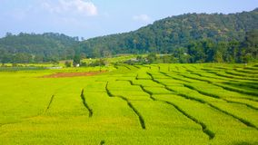 Rice terrace in chiangmai thailand Stock Photography
