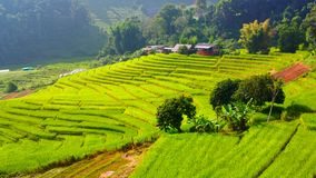 Rice terrace in chiangmai thailand Royalty Free Stock Image