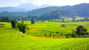 Rice terrace in chiangmai thailand Royalty Free Stock Photo