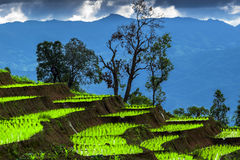 Rice terrace and cloudy Stock Image
