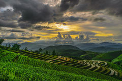 Rice terrace and cloudy Stock Photos
