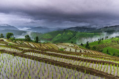 Rice terrace and cloudy Royalty Free Stock Photo