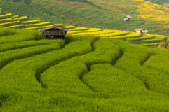 Rice terrace detail in the morning Stock Photo