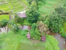 Rice terrace at Doi Inthanon National Park Chom Thong District Chiang Mai Province, Thailand in bird eye view. The Rice terrace at Doi Inthanon National Park royalty free stock photography