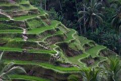Rice Terrace field Stock Photo