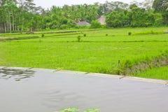 Rice Terrace field, Ubud Bali, Indonesia Royalty Free Stock Photography