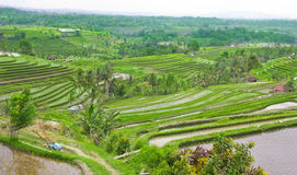 Rice Terrace field Ubud Bali, Indonesia Royalty Free Stock Photos