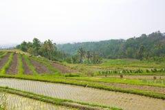 Rice Terrace field, Ubud Bali, Indonesia Stock Photography