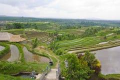 Rice Terrace field, Ubud Bali, Indonesia Stock Photo
