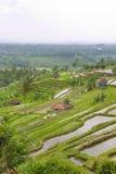 Rice Terrace field, Ubud Bali, Indonesia Royalty Free Stock Photo
