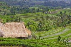 Rice Terrace field, Ubud Bali, Indonesia Stock Image