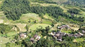 Rice terrace field royalty free stock images
