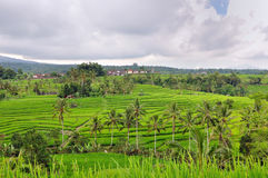 Rice terrace fields in Bali, Indonesia Stock Photos