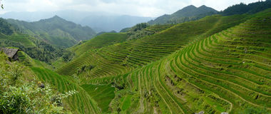 Rice terrace fields Stock Photo