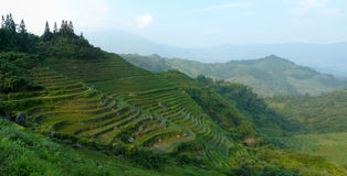 Rice terrace fields Royalty Free Stock Photos