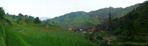 Rice terrace fields Royalty Free Stock Images
