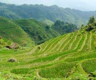 Rice terrace fields Stock Photography