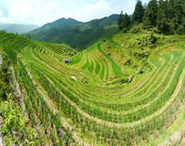 Rice terrace fields Royalty Free Stock Photography