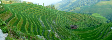 Rice terrace fields Stock Photos