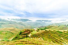 Rice terrace fields by longesheng in China Stock Photo