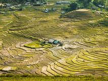 Rice terrace fields Royalty Free Stock Image