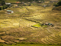 Rice terrace fields Stock Images