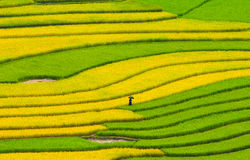 Rice terrace fields in Sapa, northwest Vietnam Stock Photos