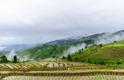 Rice terrace and foggy Stock Photography