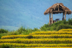 Rice Terrace & grass hut, Sapa, Vietnam. A grass hut sitting atop rice terraces in a valley Stock Photos