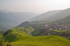 Rice terrace of Guanxi. Rice fields in China, Guanxi Stock Image