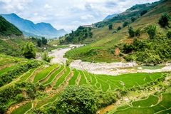 Rice Terrace In Sapa Vietnam Royalty Free Stock Photo