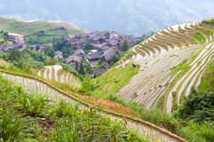 Rice terrace landscape Royalty Free Stock Photo