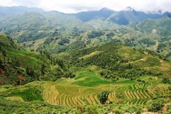 Rice Terrace Landscape. Rice Terrace field in Sapa North Vietnam Stock Photos