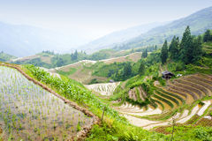 Rice terrace landscape in China Stock Photo