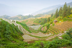 Rice terrace landscape in China Stock Photos