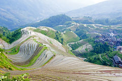 Rice terrace landscape in China Stock Images