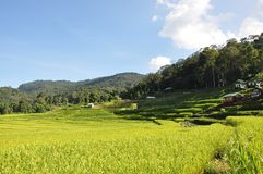 Rice terrace Royalty Free Stock Images
