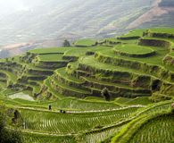 Rice terrace on the mountain Stock Photography