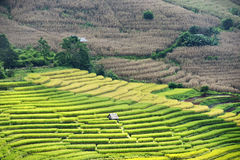 Rice terrace on mountain Royalty Free Stock Images