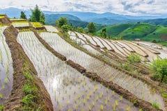 Rice terrace and mountain at Pa Bong Piang near Inthanon National Park and Mae Chaem, Chiangmai, Thailand. Stock Photo