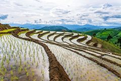 Rice terrace and mountain at Pa Bong Piang near Inthanon National Park and Mae Chaem, Chiangmai, Thailand. Stock Images