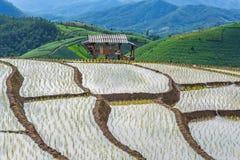 Rice terrace and mountain at Pa Bong Piang near Inthanon National Park and Mae Chaem, Chiangmai, Thailand. Royalty Free Stock Image