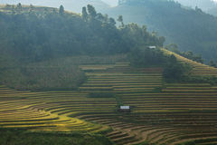Rice terrace on the moutain in Vietnam. Stock Photography