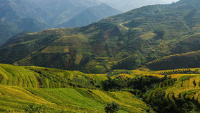 Rice terrace on the moutain in Vietnam. Royalty Free Stock Images