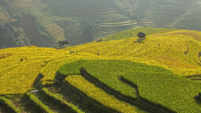 Rice terrace on the moutain in Vietnam. Stock Photo