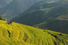 Rice terrace on the moutain in Vietnam. Stock Photos